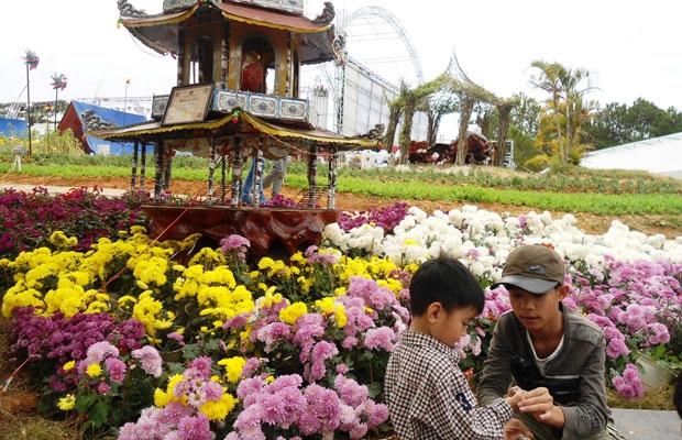 Mùa hoa cúc tại bình dị tại làng hoa Thái Phiên