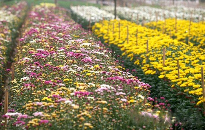 Những luống hoa đủ màu sắc