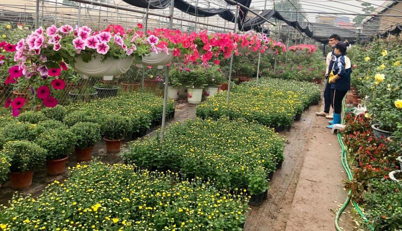 Làng hoa Xuân Quan, Hưng Yên
