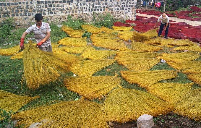 Cói Phú Tân