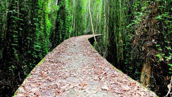 Con đường vào làng nổi Tân Lập