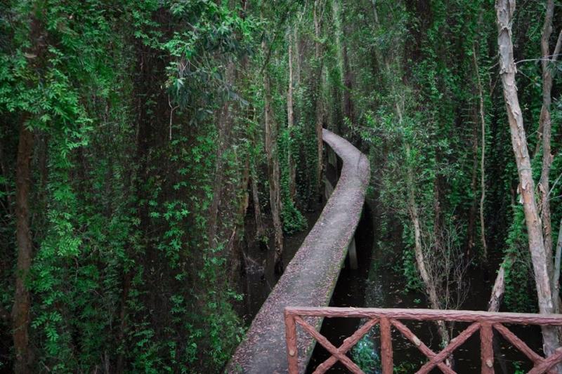 Con đường nhỏ xuyên qua rừng tràm