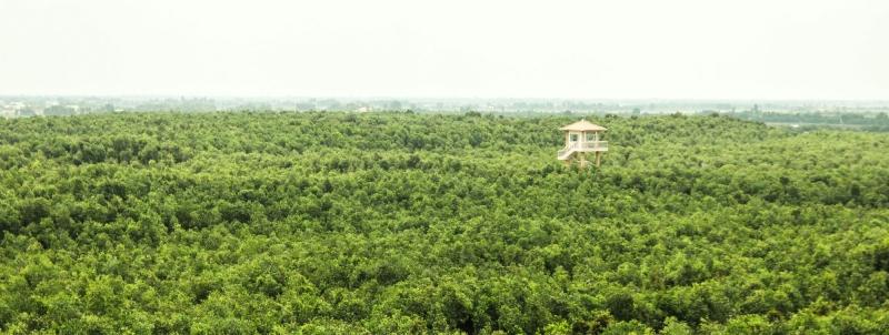 Khung cảnh bao la, hùng vĩ của rừng tràm