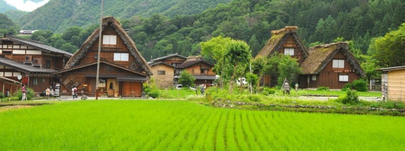 Làng Shirakawa-go với những ngôi nhà duyên dáng bên đồng lúa