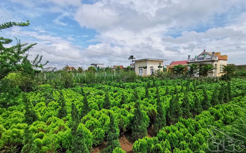 Làng vườn Bách Thuận