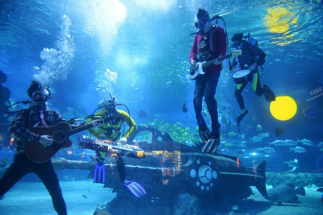 Lễ hội âm nhạc dưới biển