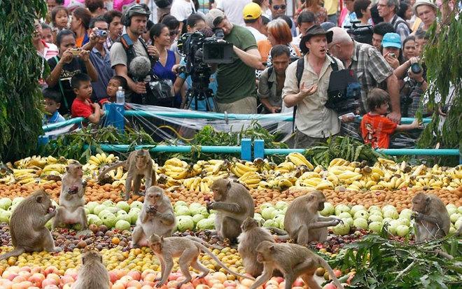 Lễ hội buffet dành cho khỉ ở tỉnh Lopburi (Thái Lan)