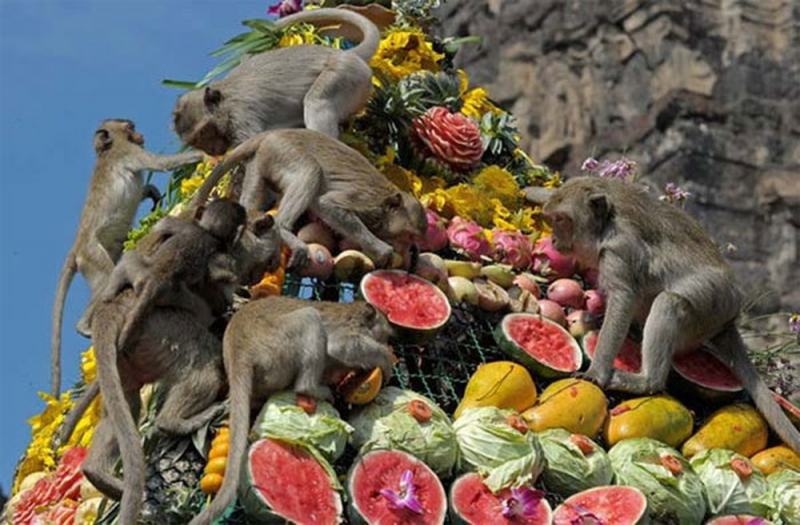 Lễ hội dành cho khỉ ở Thái Lan