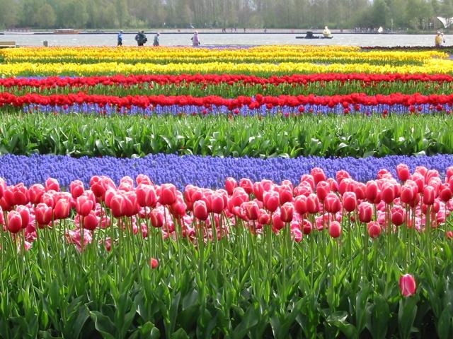 Lễ hội hoa Floriade, Hà Lan
