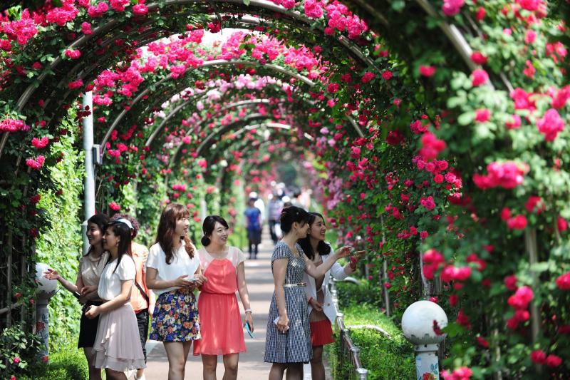 Lễ hội hoa hồng ở Hàn Quốc