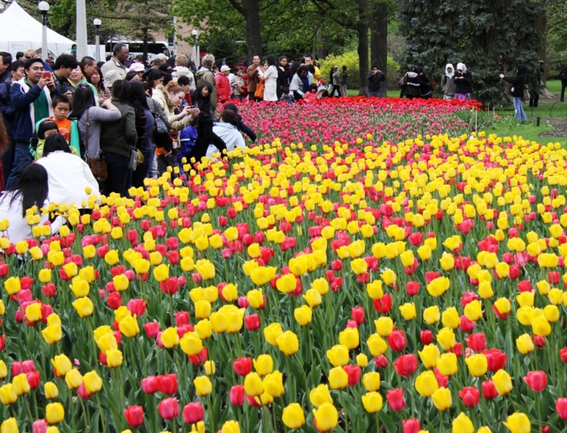 Lễ hội hoa Tulip, Canada