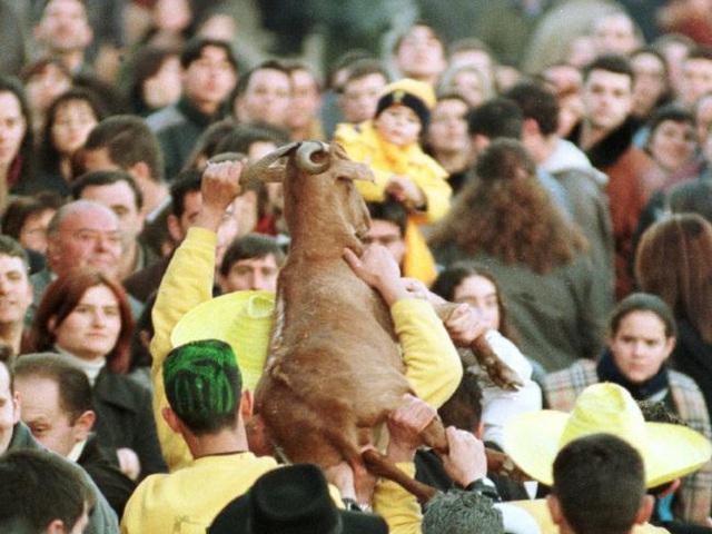 Lễ hội ném dê ở Tây Ban Nha
