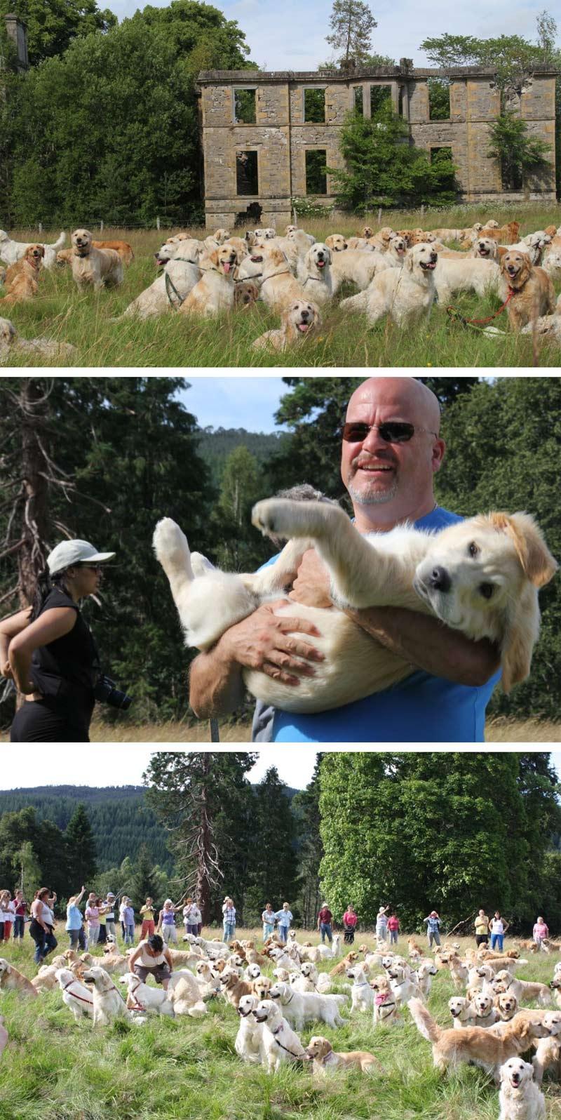 Lễ hội chó săn Golden Retriever