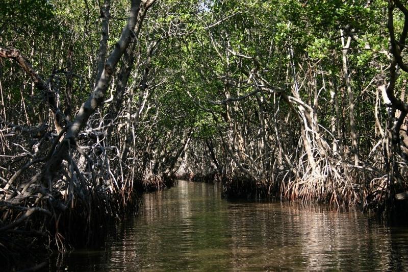 Vùng đầm lầy nơi lính Nhật bị cá sấu tấn công tại Ramree