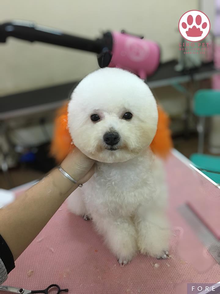 Lino Pet