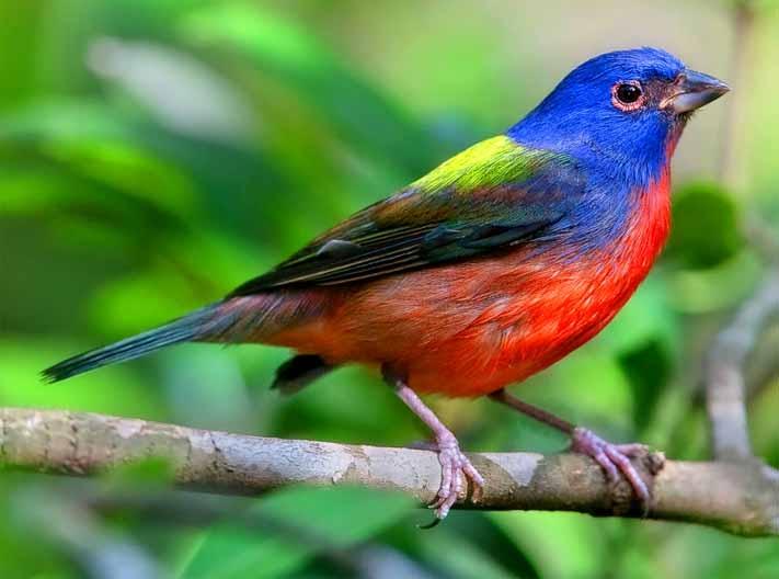 Top 18 Loài chim đẹp nhất thế giới
