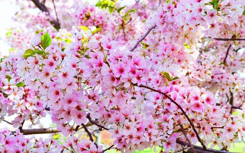 Top 10 loài hoa có hình dáng lạ kì nhất thế giới