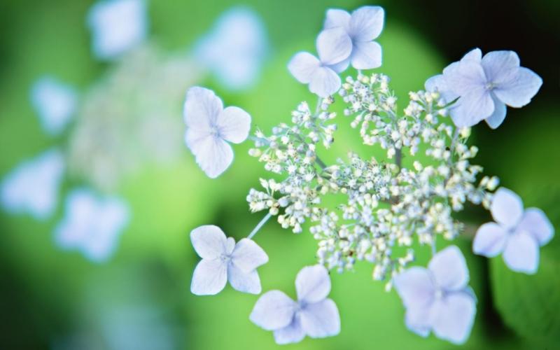 Top 14 loài hoa đẹp nhưng độc nhất thế giới