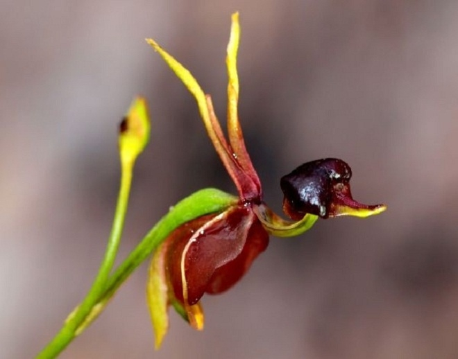 Top 10 loài hoa kỳ lạ nhất thế giới sẽ làm bạn bất ngờ