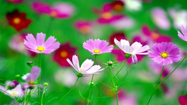 Top 6 Loài hoa xinh đẹp gây chết người