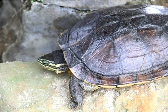 Loài vật sống lâu nhất - loài Rùa