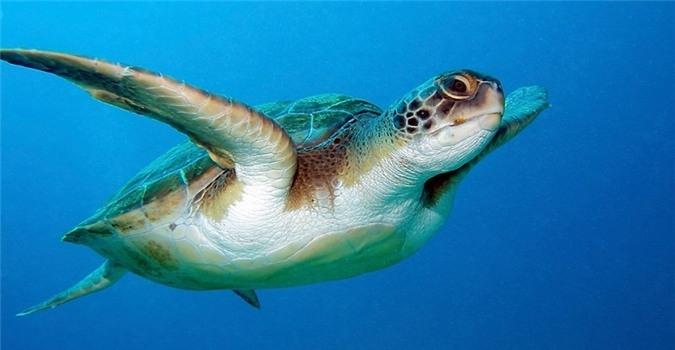 Rùa- động vật sống lâu nhất