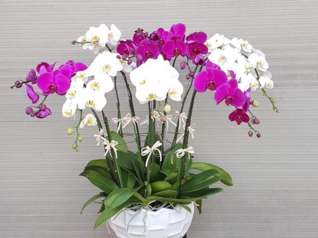 Love Flowers Shop