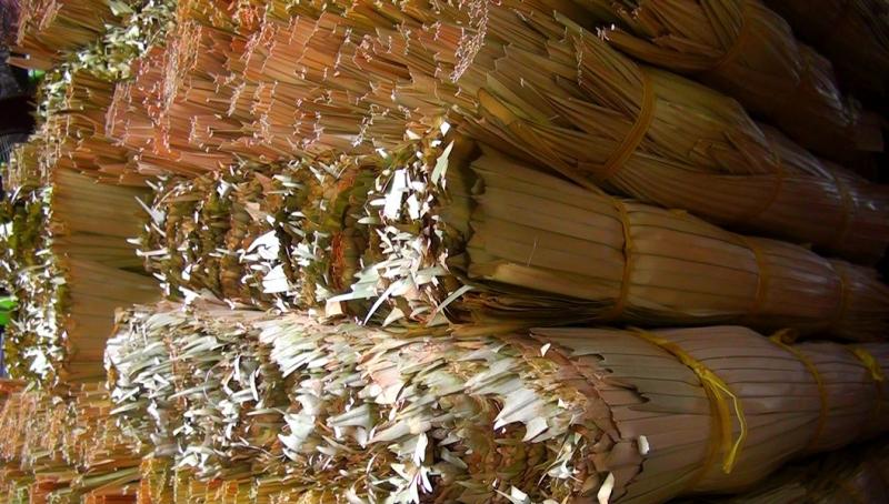 Lá huế - nguyên liệu không thể thiếu của nón lá miền Tây.