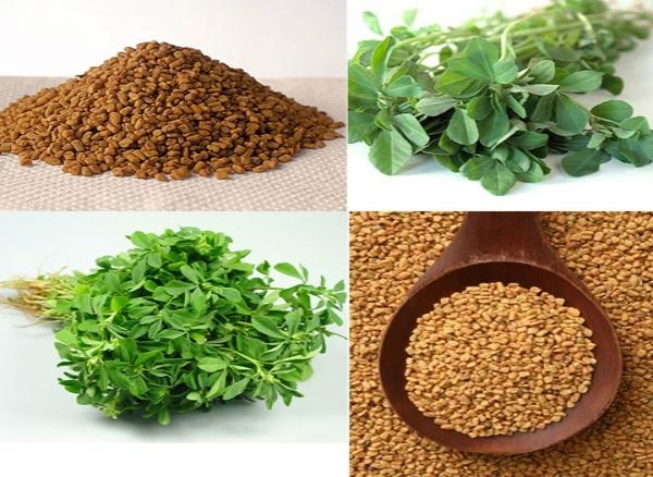 Sử dụng hạt cỏ cà ri