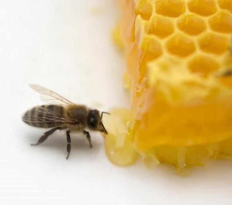 Mật ong tốt cho trí nhớ.