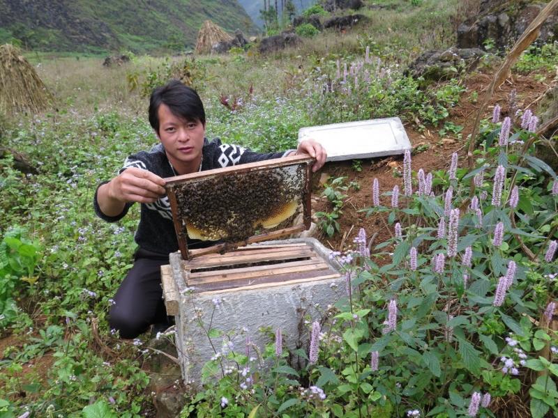 Người chủ cạnh tổ ong của mình