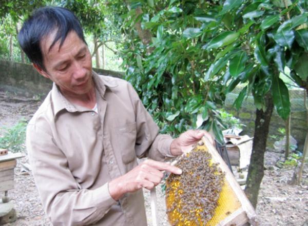 Người thu hoạch mật tại Cát Bà