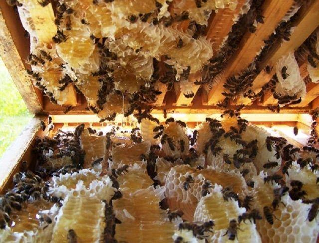 Mật ong hoa rừng Yên Tử