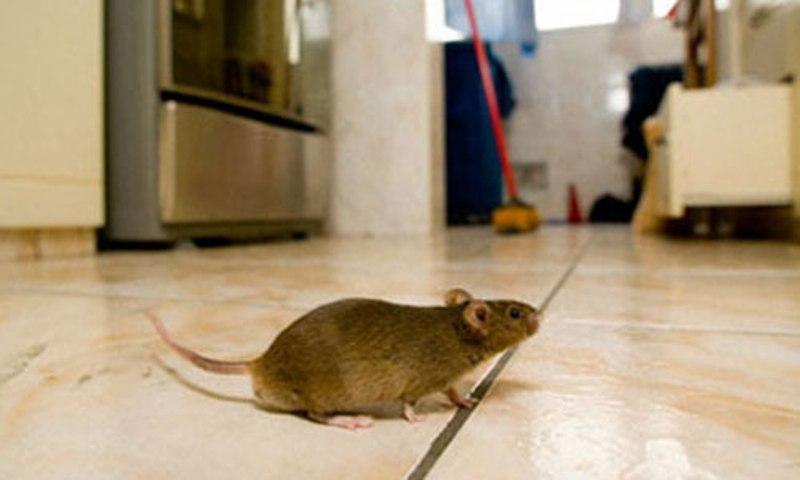 Hãy để những con chuột tránh xa nhà bạn với máy đuổi chuột