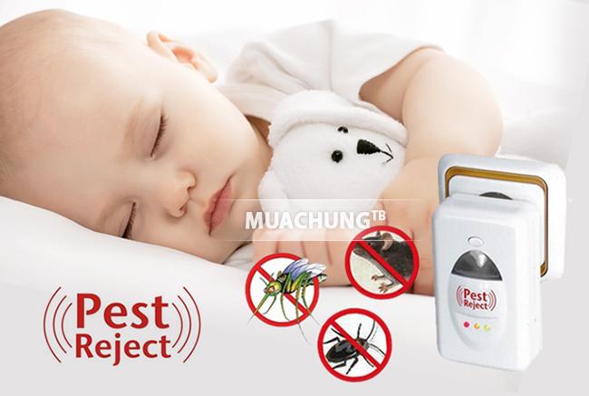 Máy đuổi chuột pest reject không chỉ đuổi chuột mà còn đuổi côn trùng hiệu quả