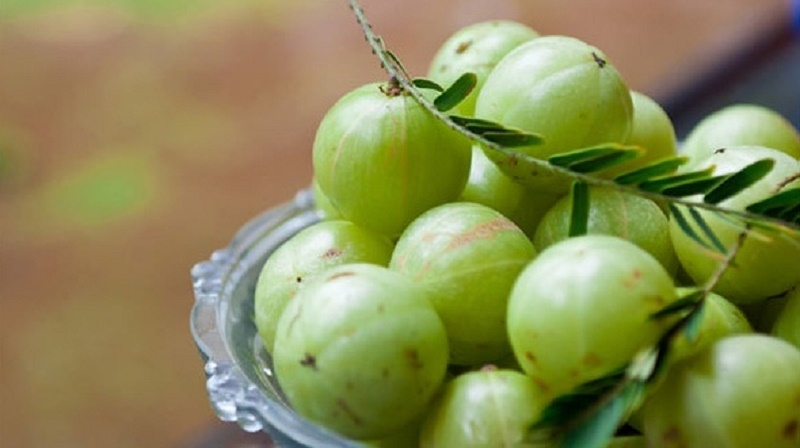 Me rừng chứa vitamin C dồi dào giúp giảm chóng mặt