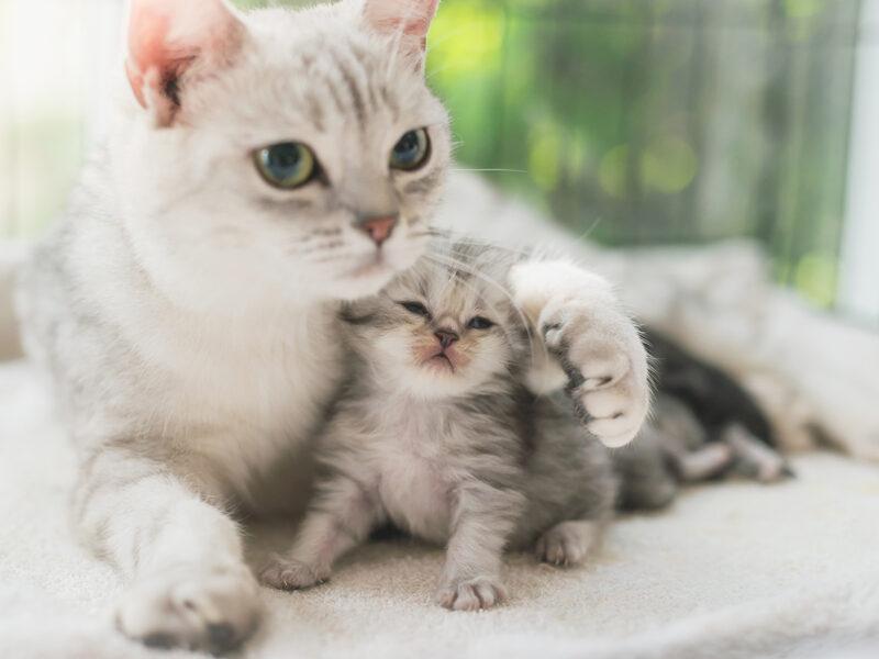 Mèo khỏe mạnh nhờ Men vi sinh BIO BACIMAX