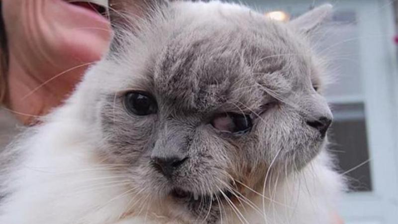 Mèo hai mặt Frank và Louie đã sống một cuộc đời trọn vẹn thì trải qua sinh nhật lần thứ 12