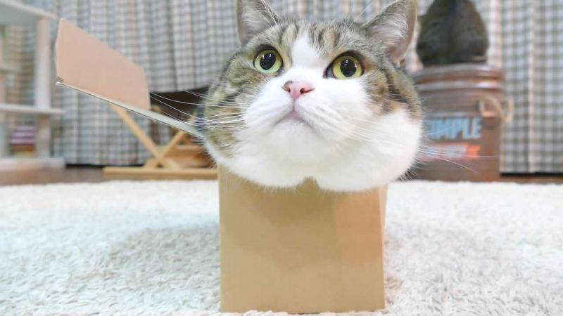 Maru là một chú mèo khá hiếu động và tò mò