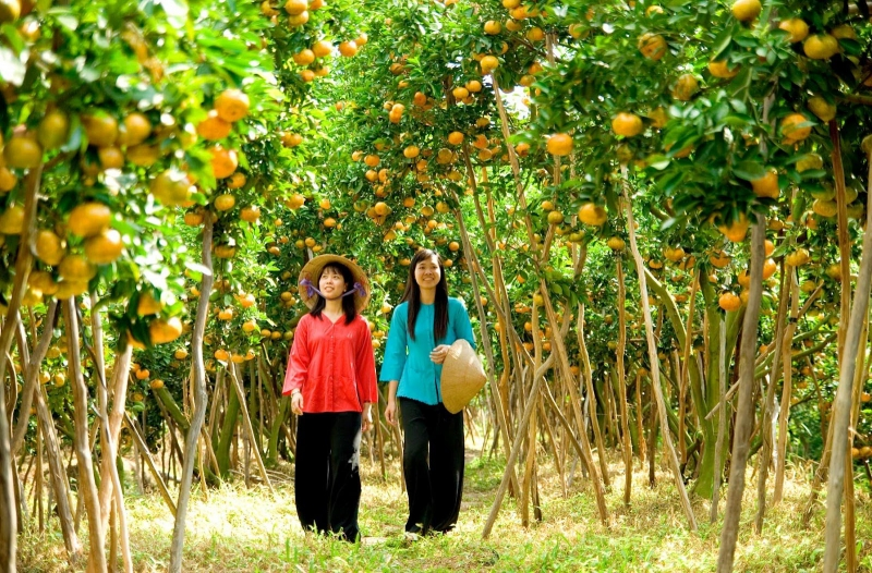 Du lịch miền Tây mùa hoa quả