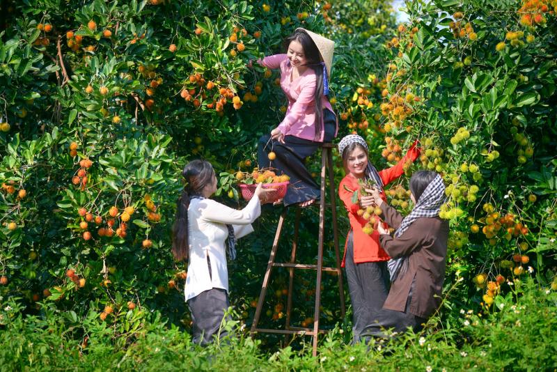 Đủ các loại trái cây