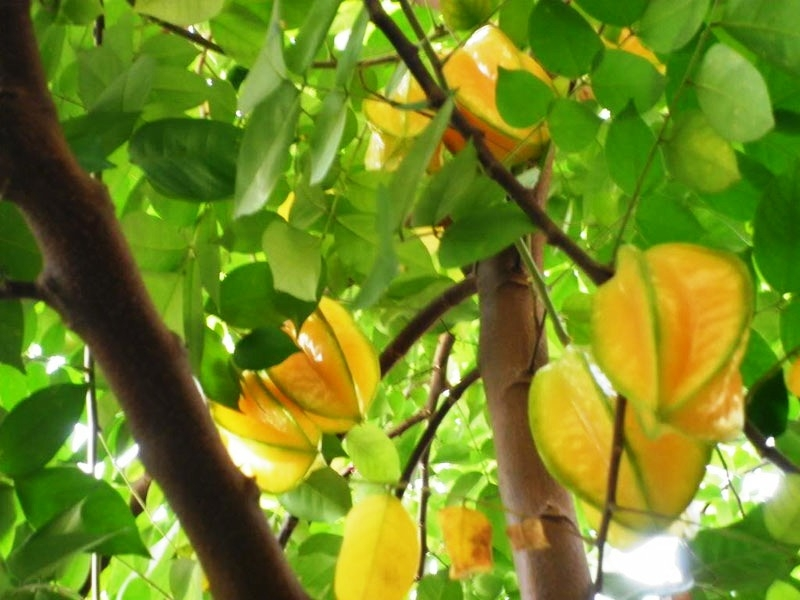 Tả cây ăn quả