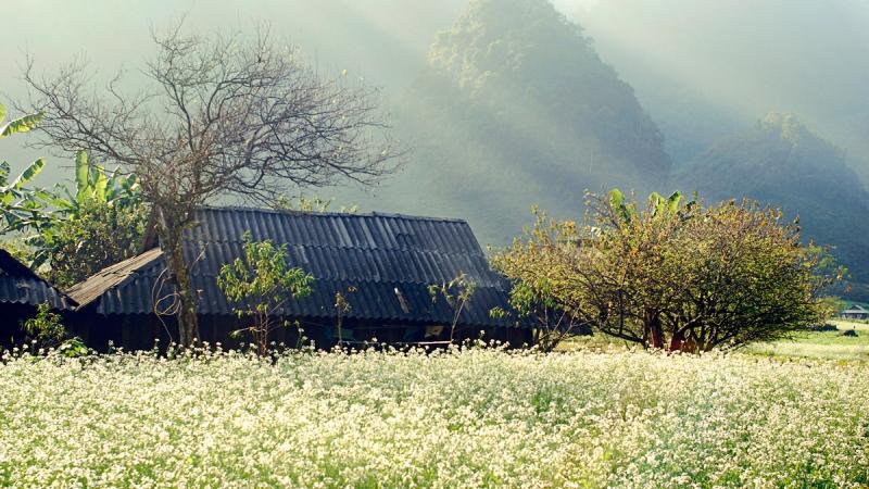 Mùa hoa ban nở trắng trời