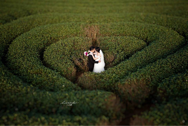 Chụp ảnh cưới ở đồi chè trái tim Mộc Châu