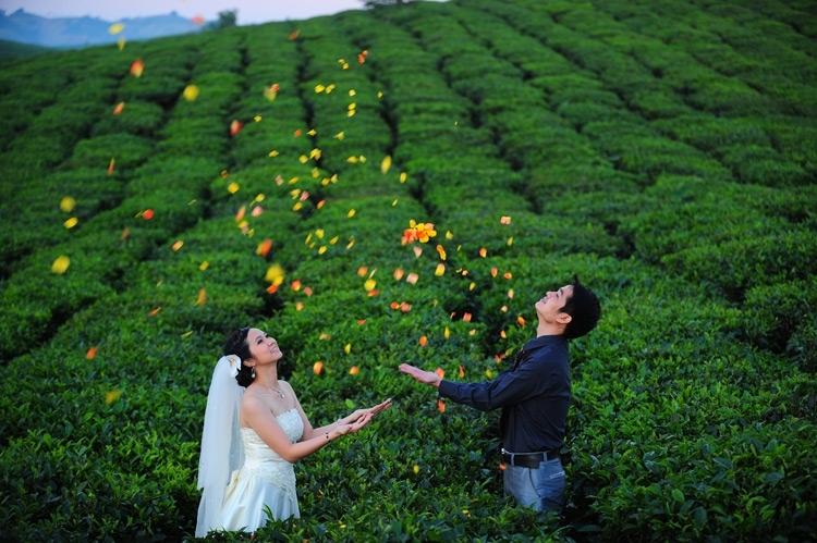 Mộc Châu, nơi chụp ảnh cưới đẹp ở miền Bắc