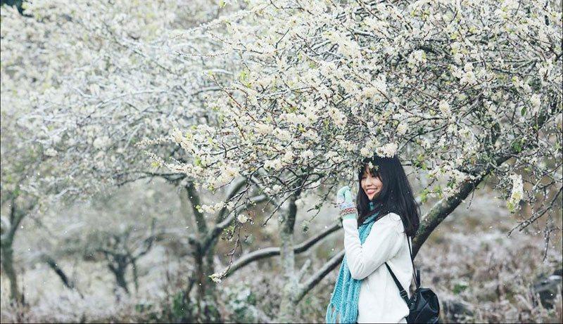 Mùa hoa mận trắng ở Mộc Châu