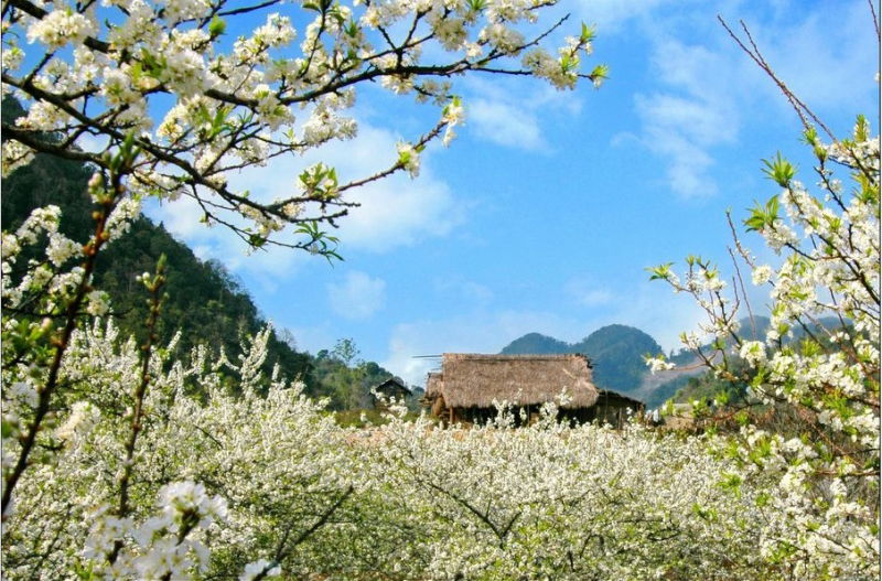 Mộc Châu - Cao nguyên xinh đẹp của Tây Bắc