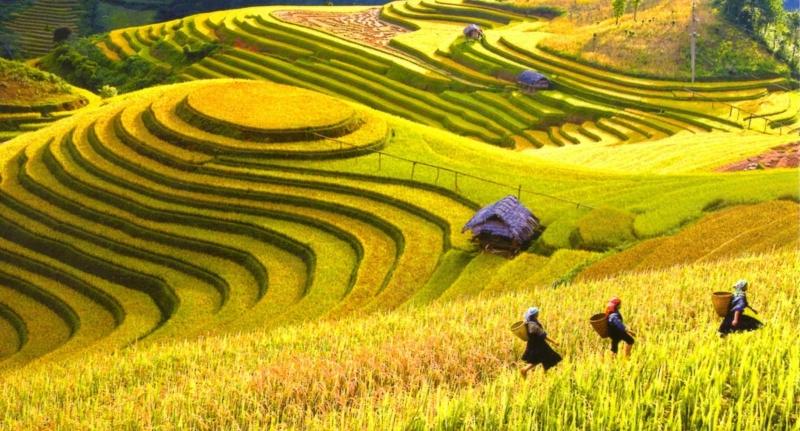 Vẻ đẹp nên thơ, lãng mạn của Mộc Châu mùa lúa chín