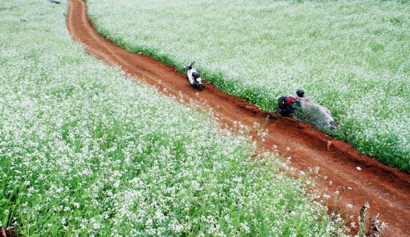 Mộc Châu - Sơn La (Cách Hà Nội hơn 200km).