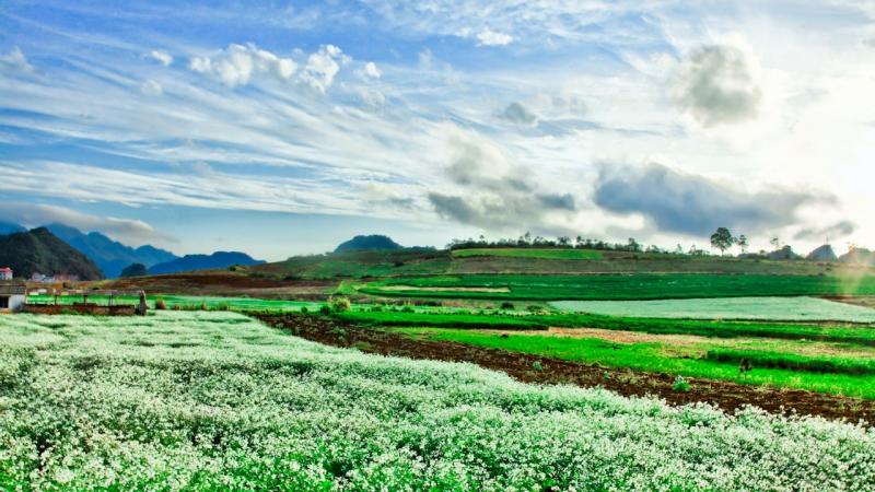 Cánh đồng hoa bất tận giữa thảo nguyên xanh bạt ngàn làm dậy lên tâm hồn hòa mình với thiên nhiên của bạn trẻ